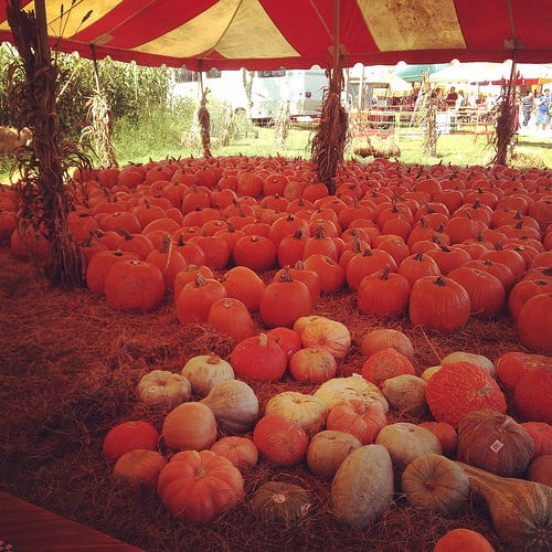 Hunsader Farms Pumpkin Festival