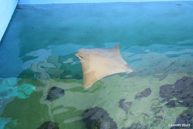 Clearwater Marine Aquarium Trip